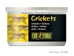 Exo-Terra Crickets, small 1.2 oz